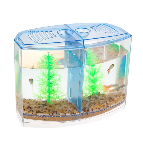 Best Double Betta Fish Tank
