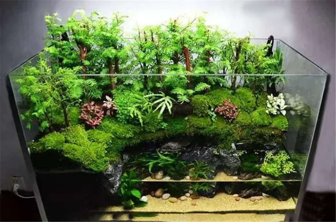 How To Make An Paludarium Aquascaping Knowledge Get You Done
