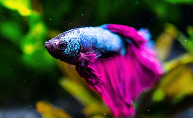 Things You Should Know About Betta Fish Sleep